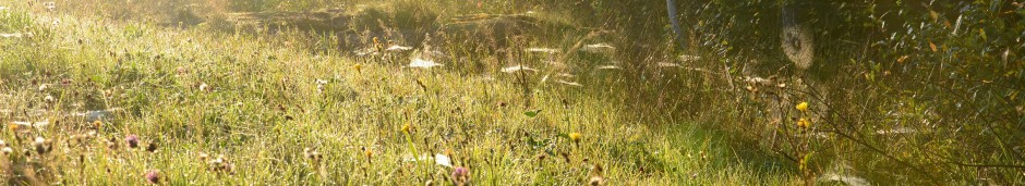 cropped-Trolsk-morgon-liten.jpg